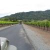 Vineyard_0029.jpg