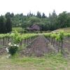 Vineyard_0037.jpg