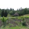 Vineyard_0038.jpg